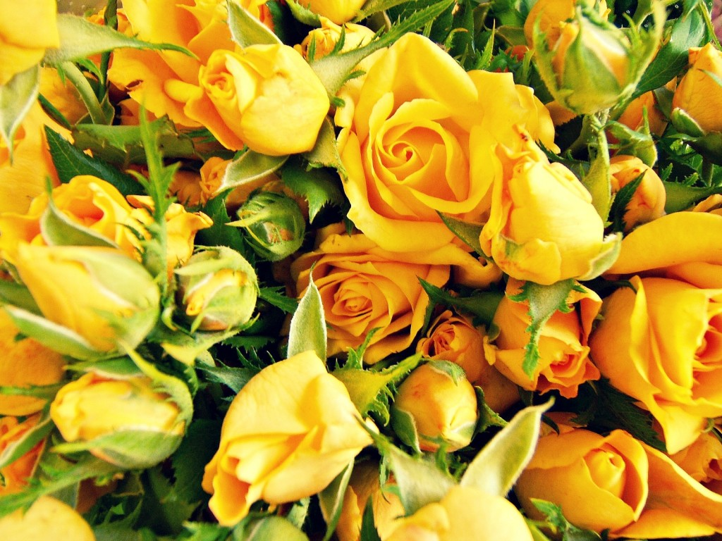 Home flower press we are one of the leading online flower delivery service based in the uk that pride ourselves on customer satisfaction izmirmasajfo