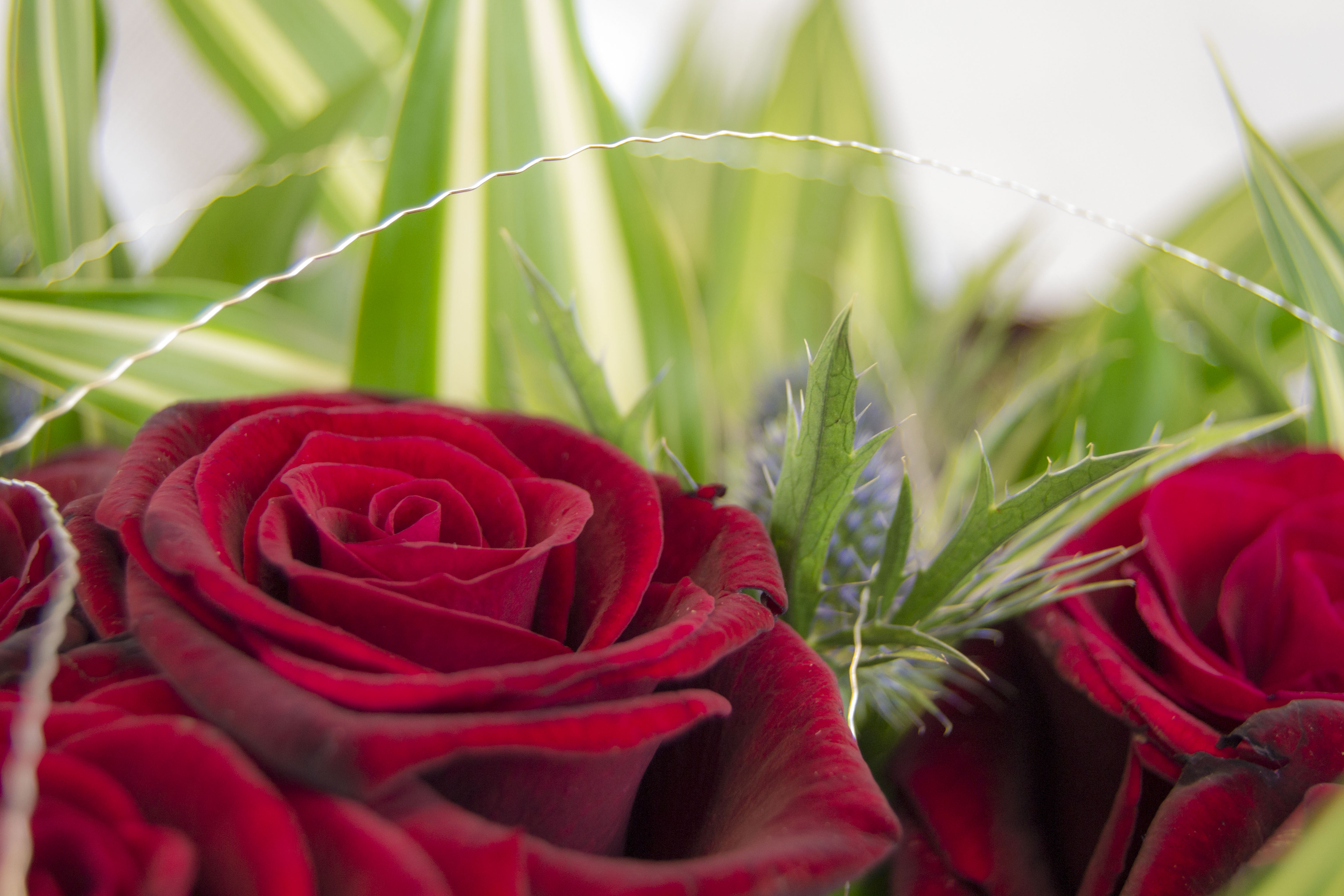 6 deadly mistakes when storing Valentine's Day flowers overnight