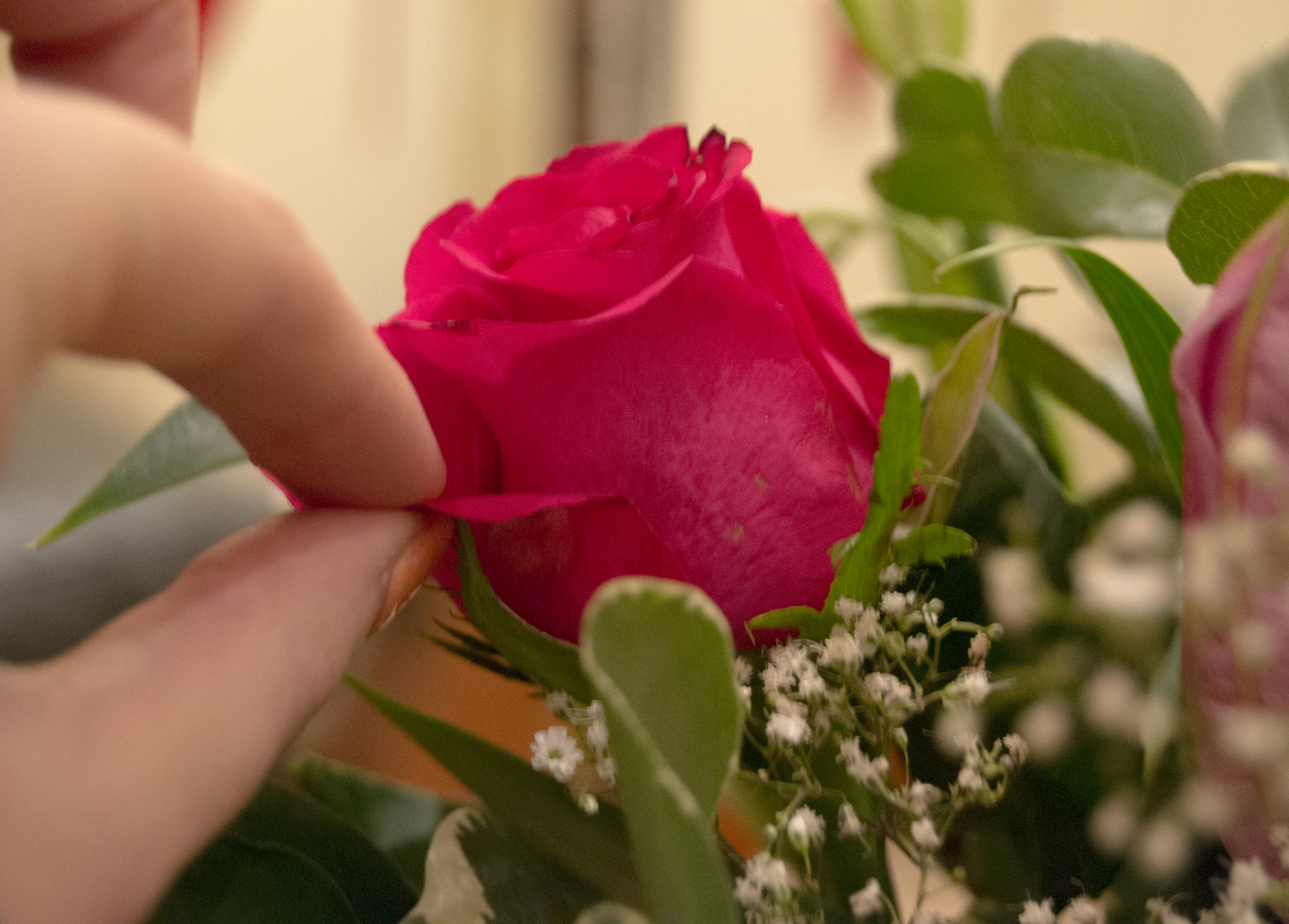 Why and How To Remove Guard Petals on Roses