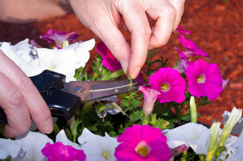Understanding deadheading and the benefits