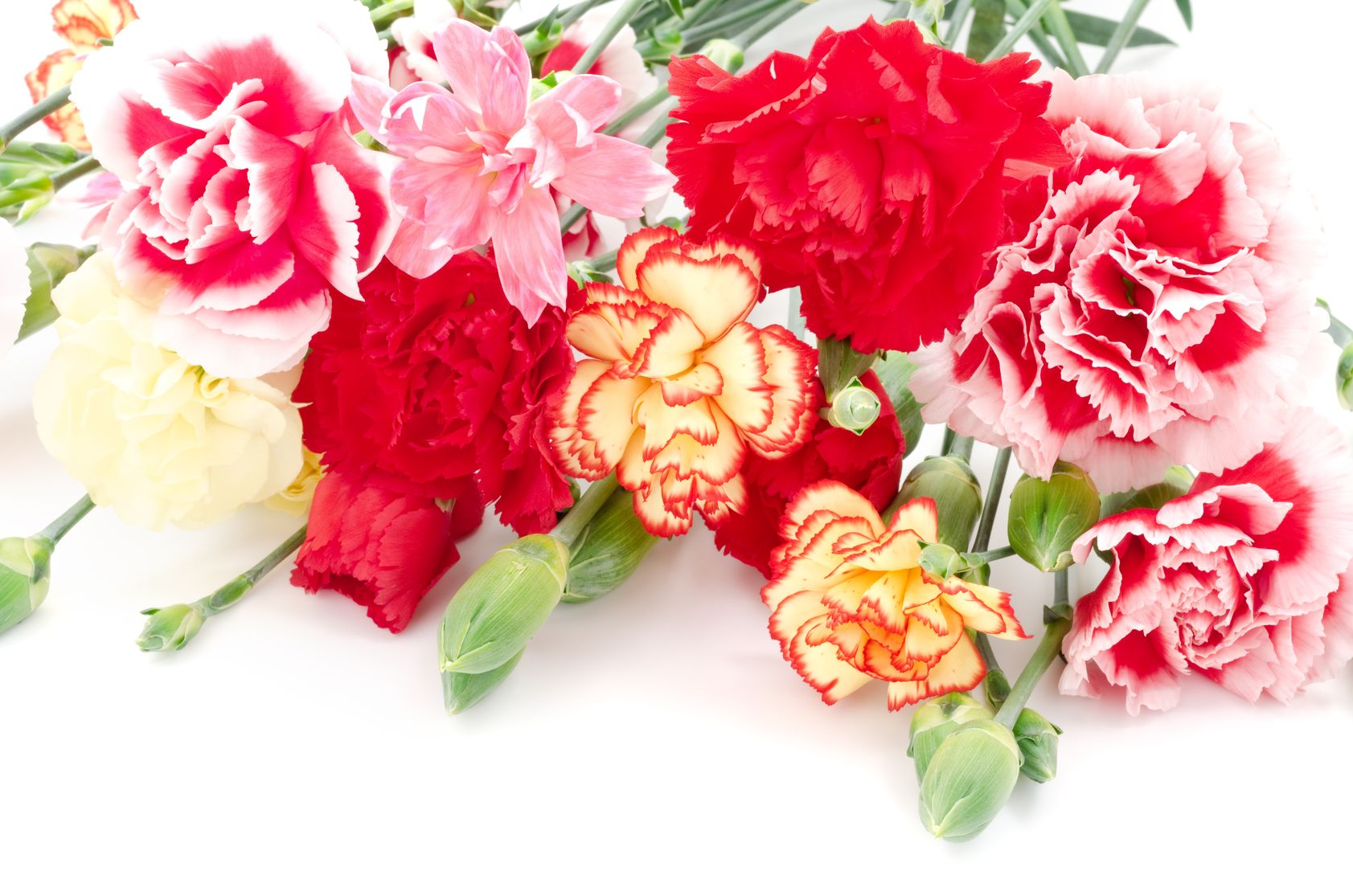 Different kinds of carnations