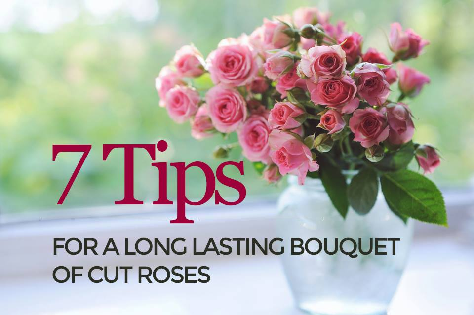 Keep Your Bouquet Of Cut Roses For Longer