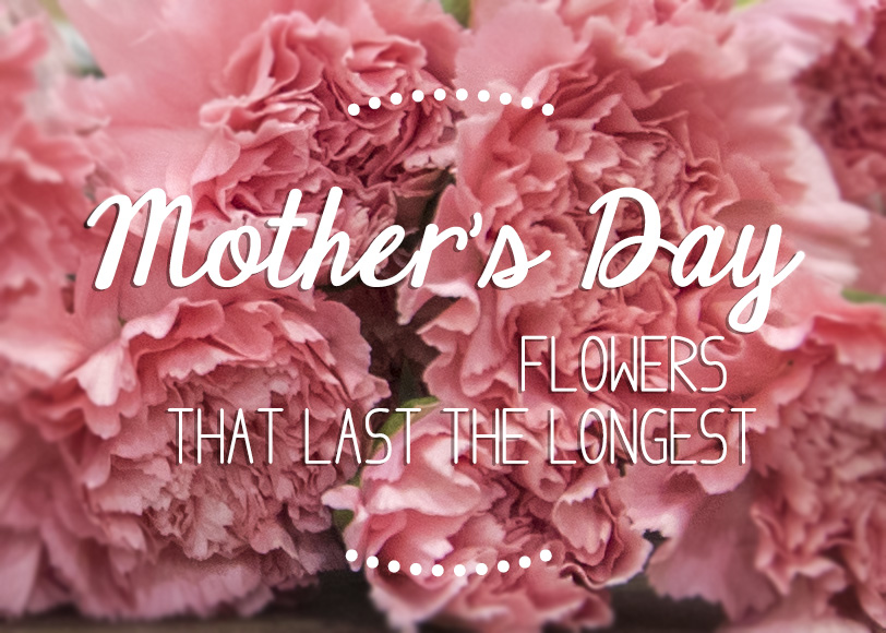 Finding Mother's Day flowers that last the longest