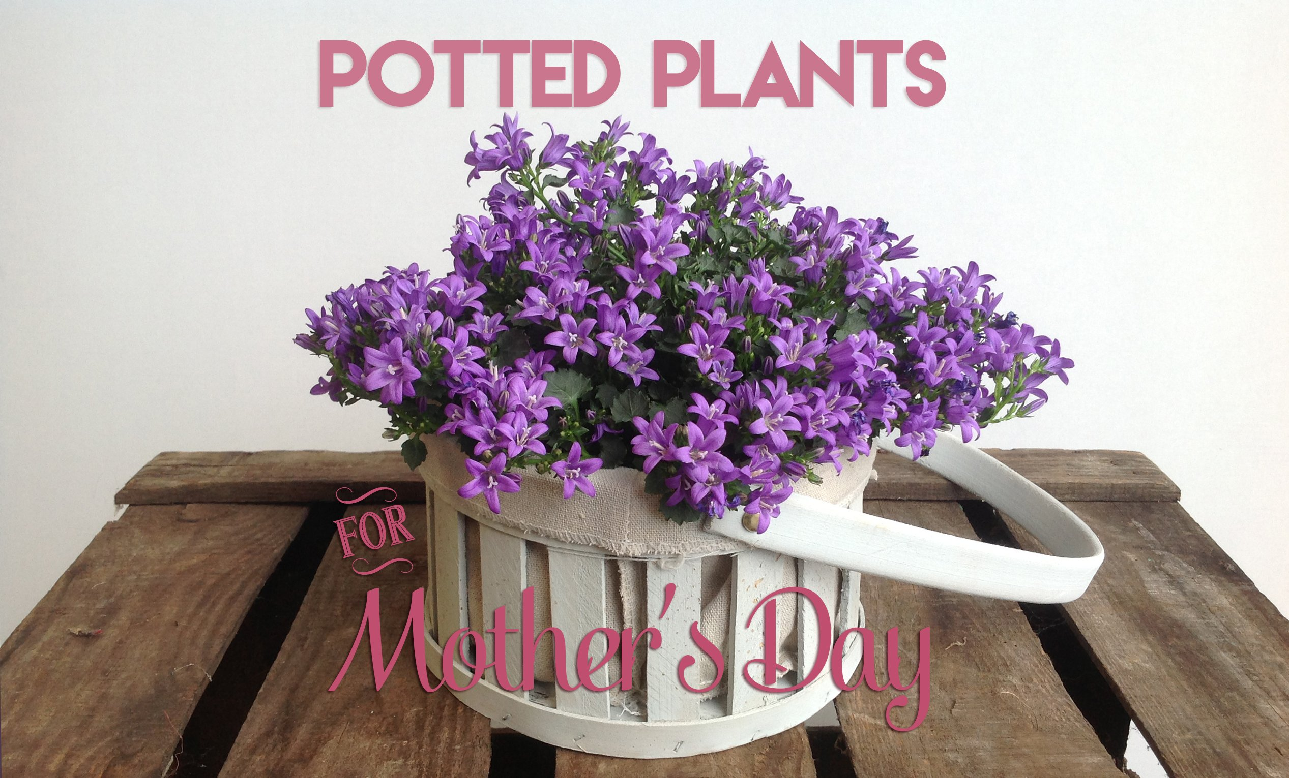 Send potted plants for Mother's Day
