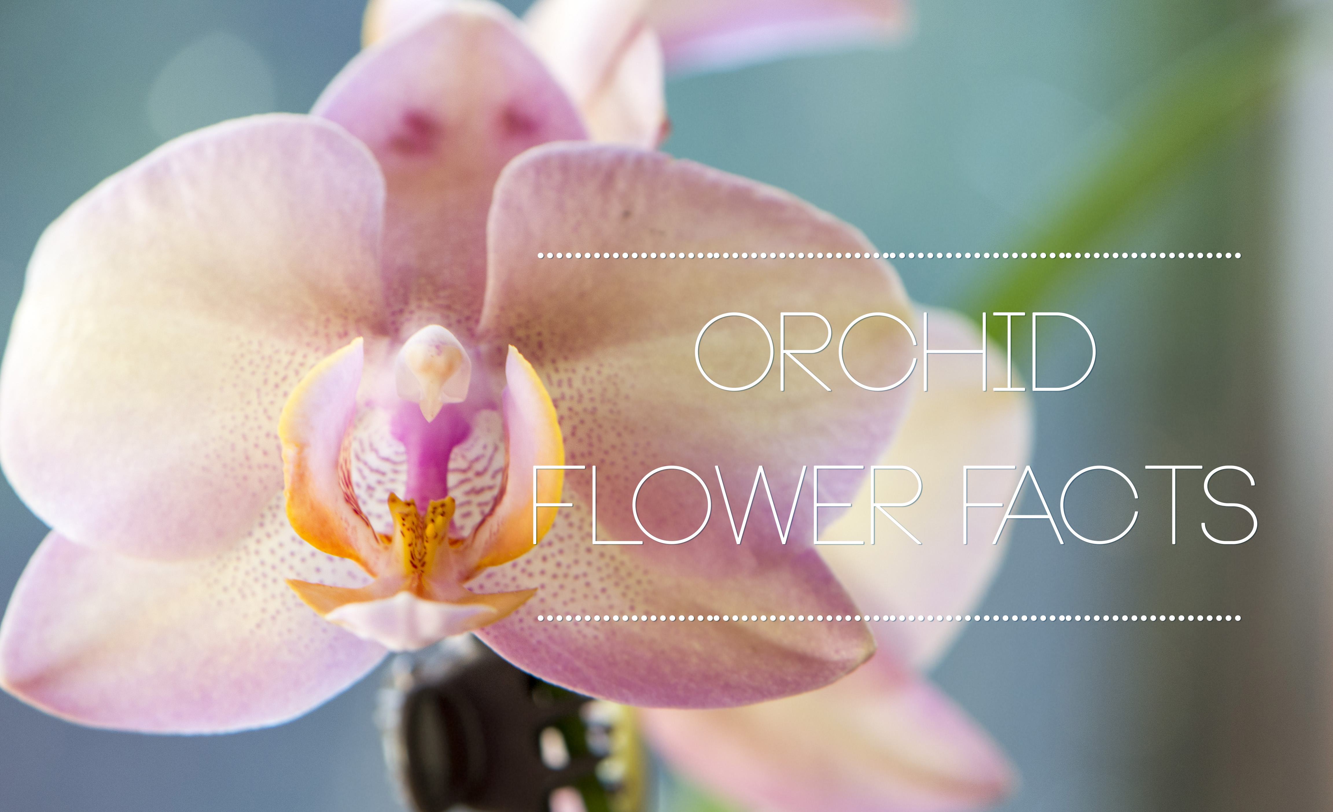 Interesting orchid flower facts