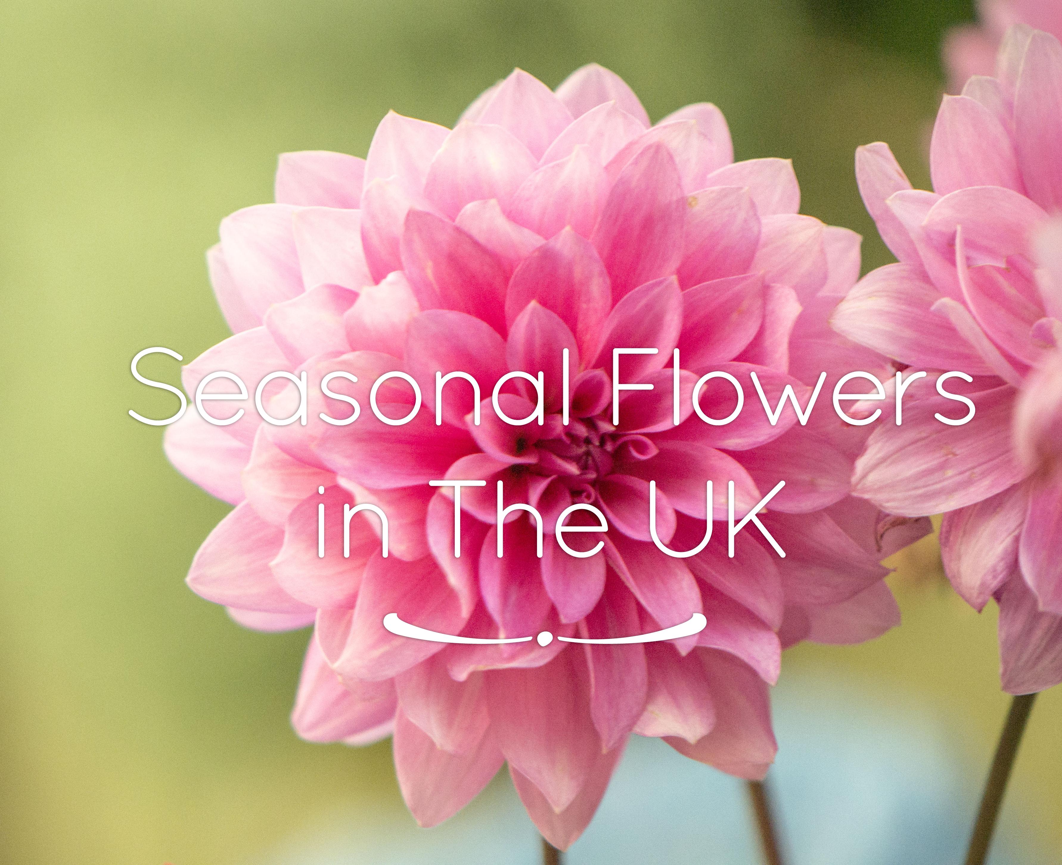 UK Seasonal Flowers