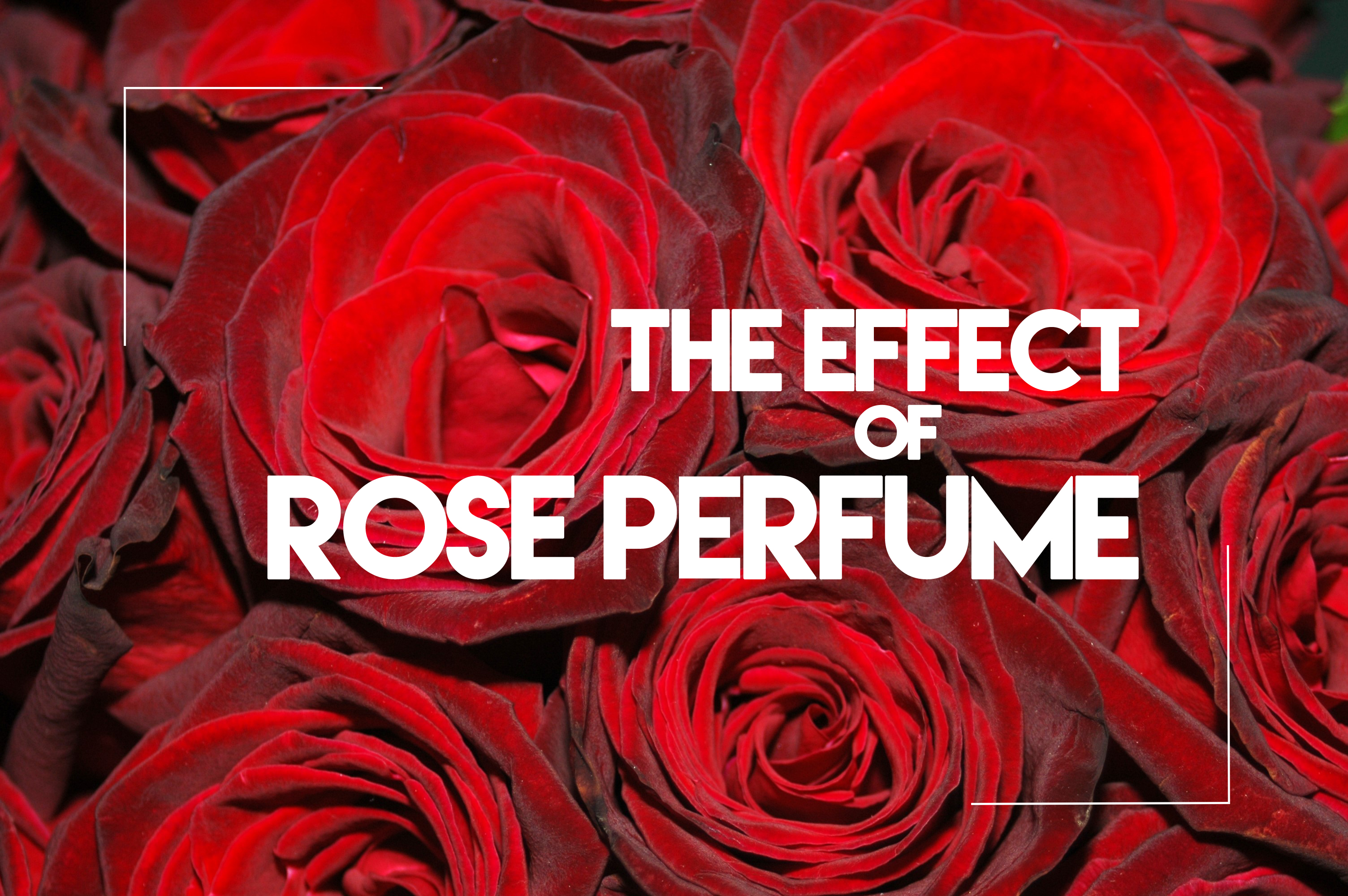 The effect of that sweet rose perfume