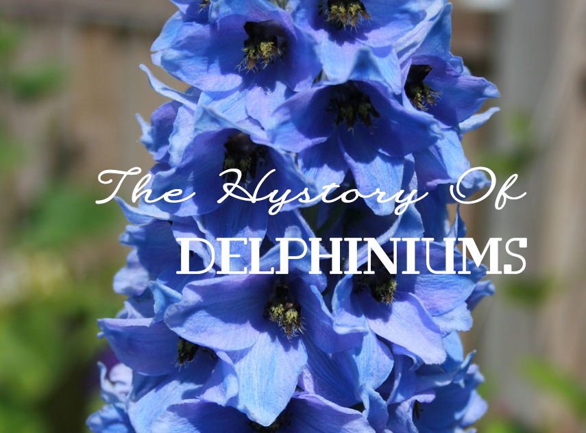 The history of delphiniums