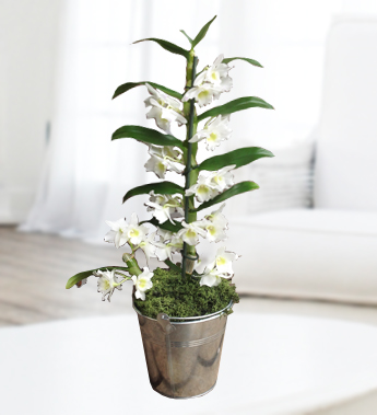 Frequently asked questions about caring for potted orchids