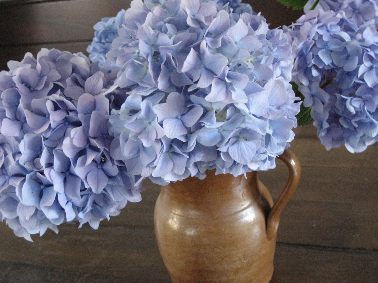 How to perk up drooping hydrangeas