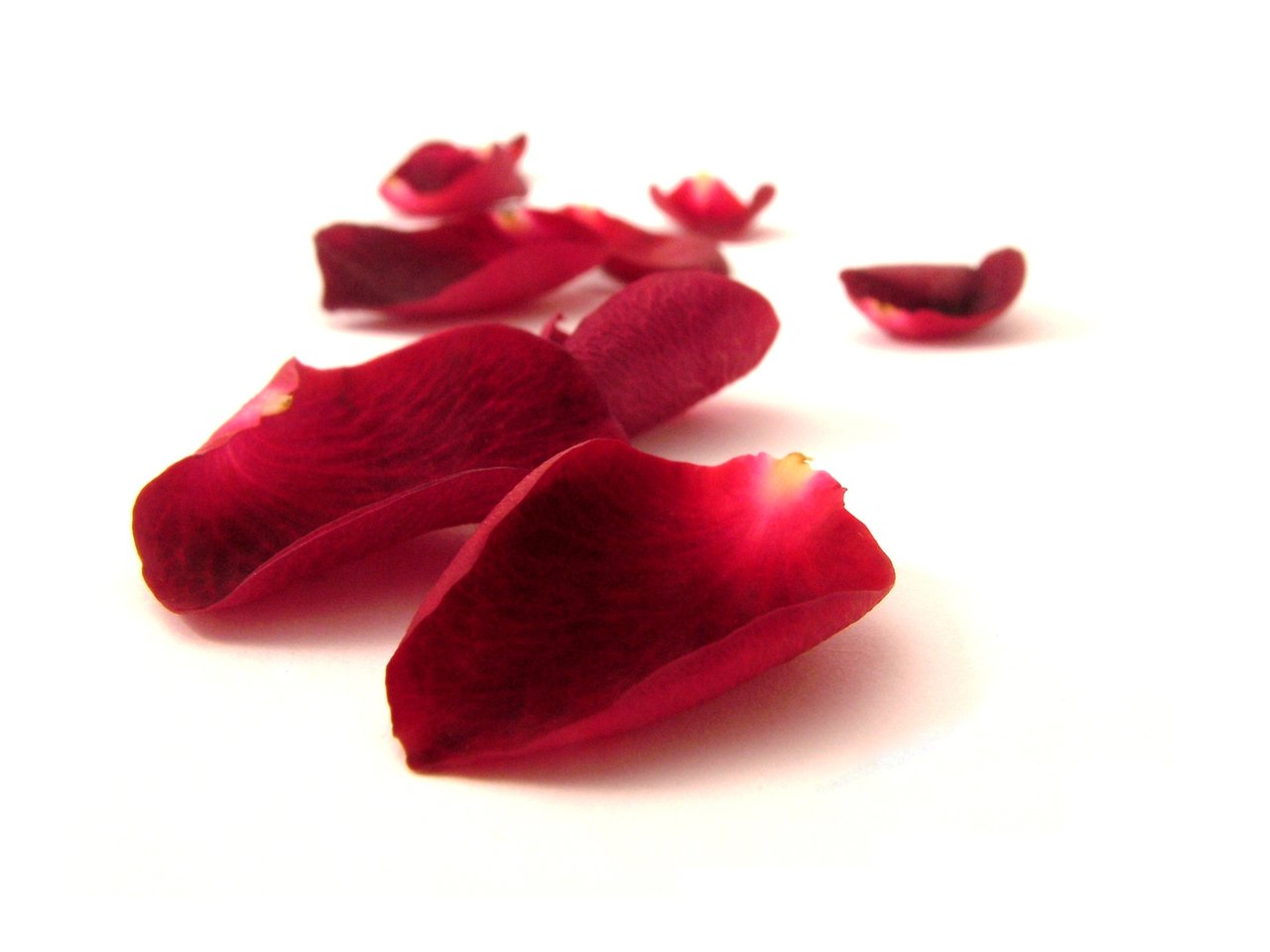 How to preserve rose petals for a romantic occasion