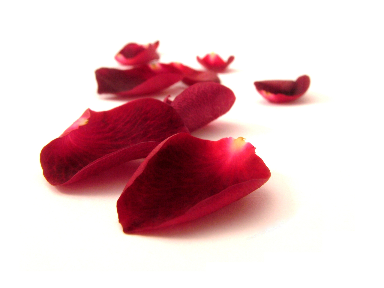 How to preserve rose petals
