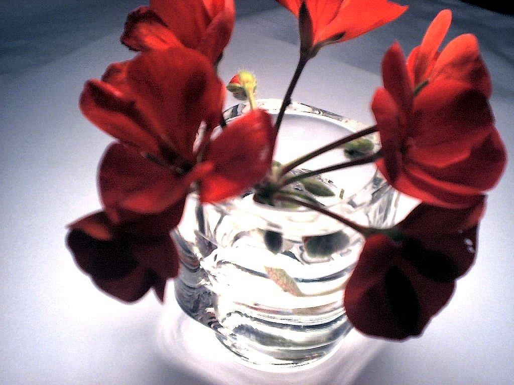 Display tips for short-stemmed flowers