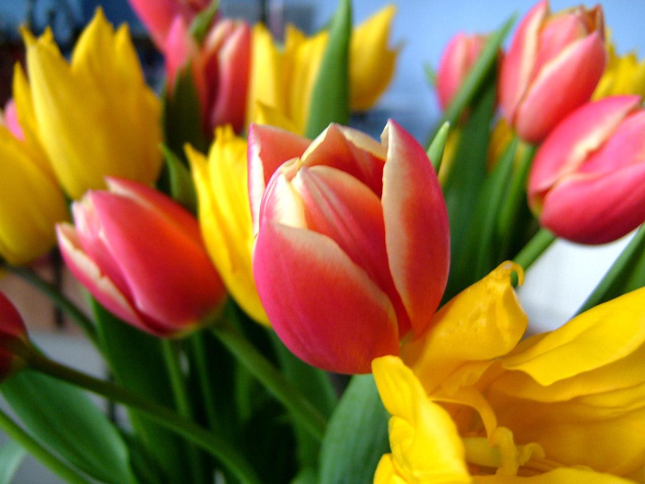 Flowers for new love interest