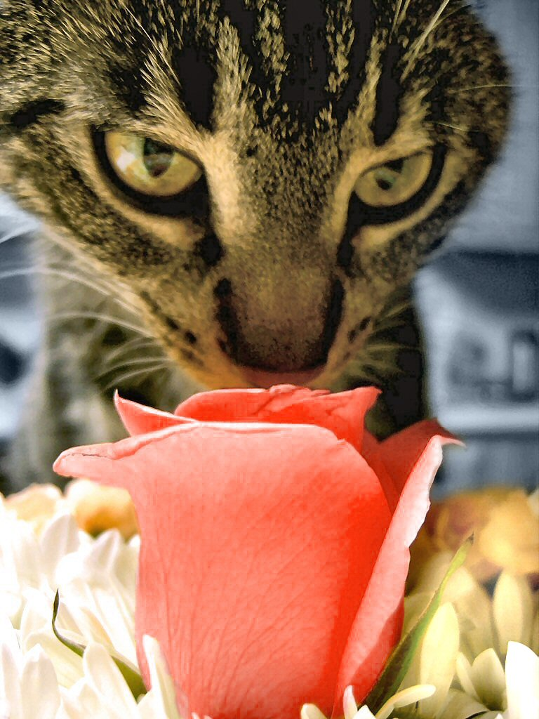 Keeping your pets away from flowers and plants