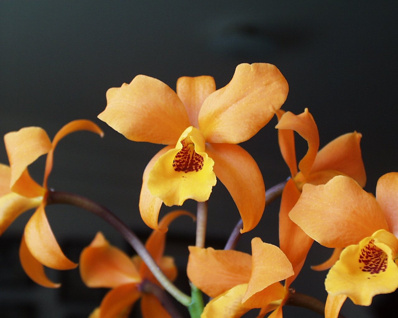 Bold orchid floral displays