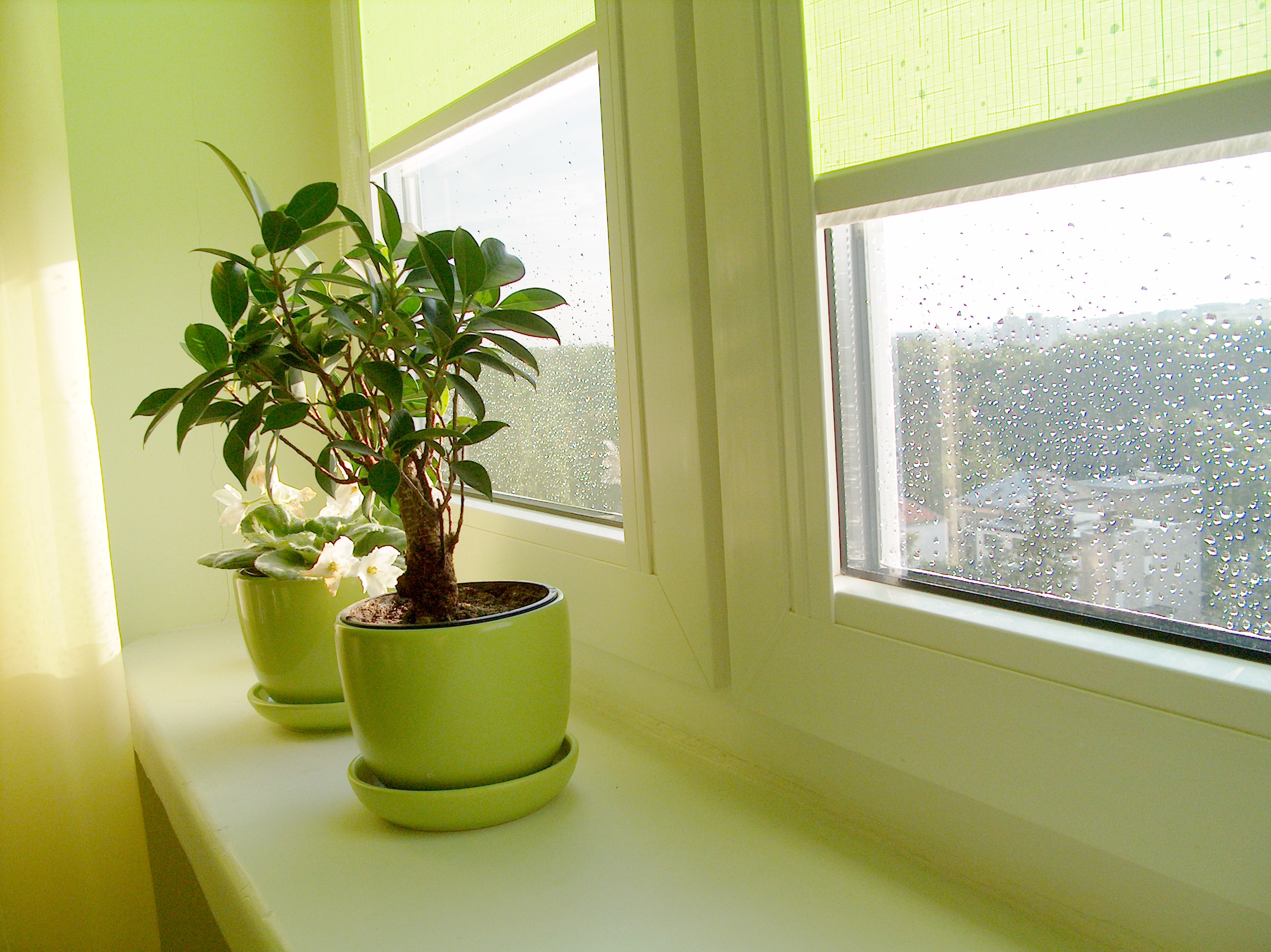 Decorate your home with house plants