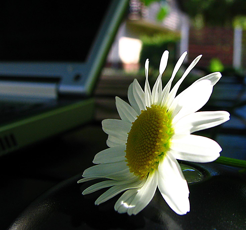 Online flower shopping – A beginner's guide