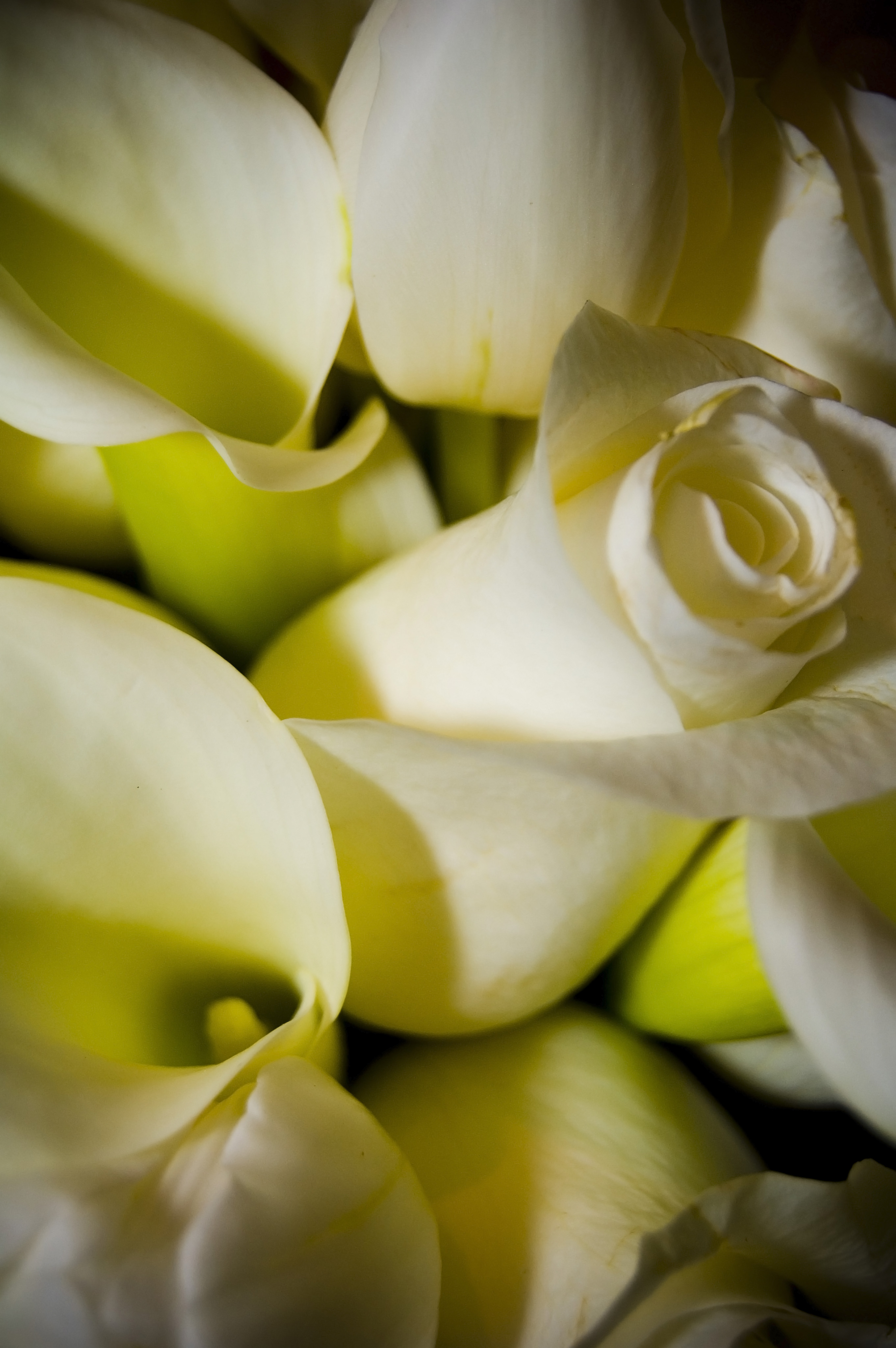 Terrific flower scents to improve your mood