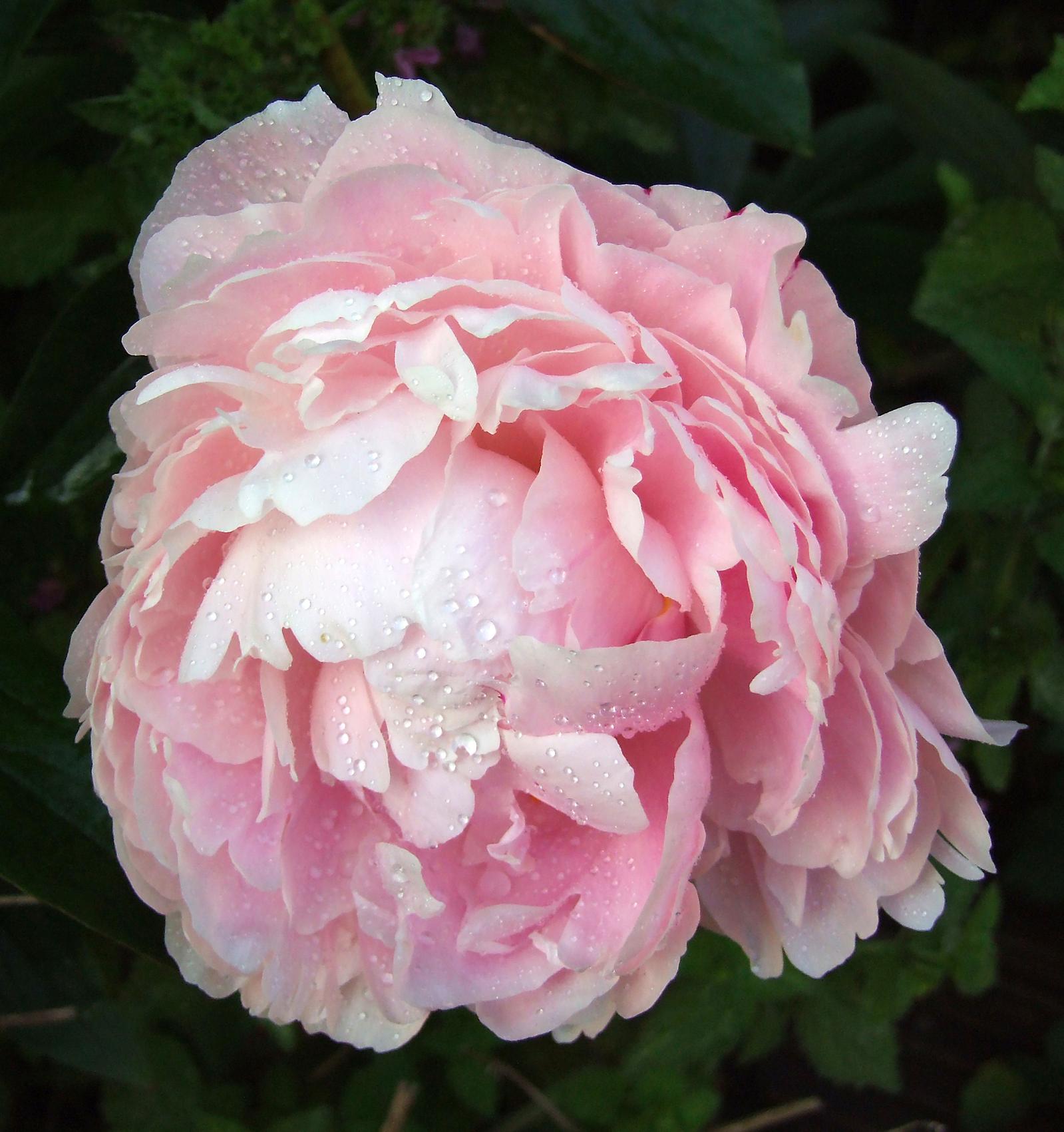 Practical advice for silk flower arranging