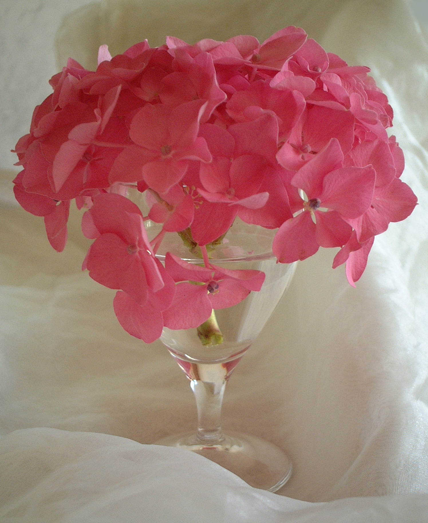 Creative design tips with hydrangeas