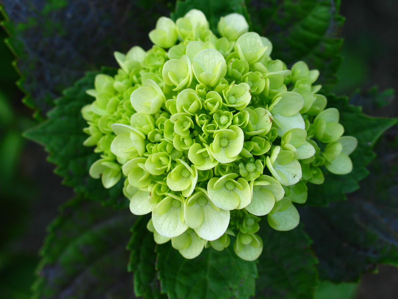 Tips for creating the perfect green flower arrangement