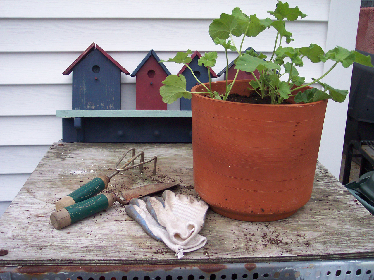 Things every gardener needs