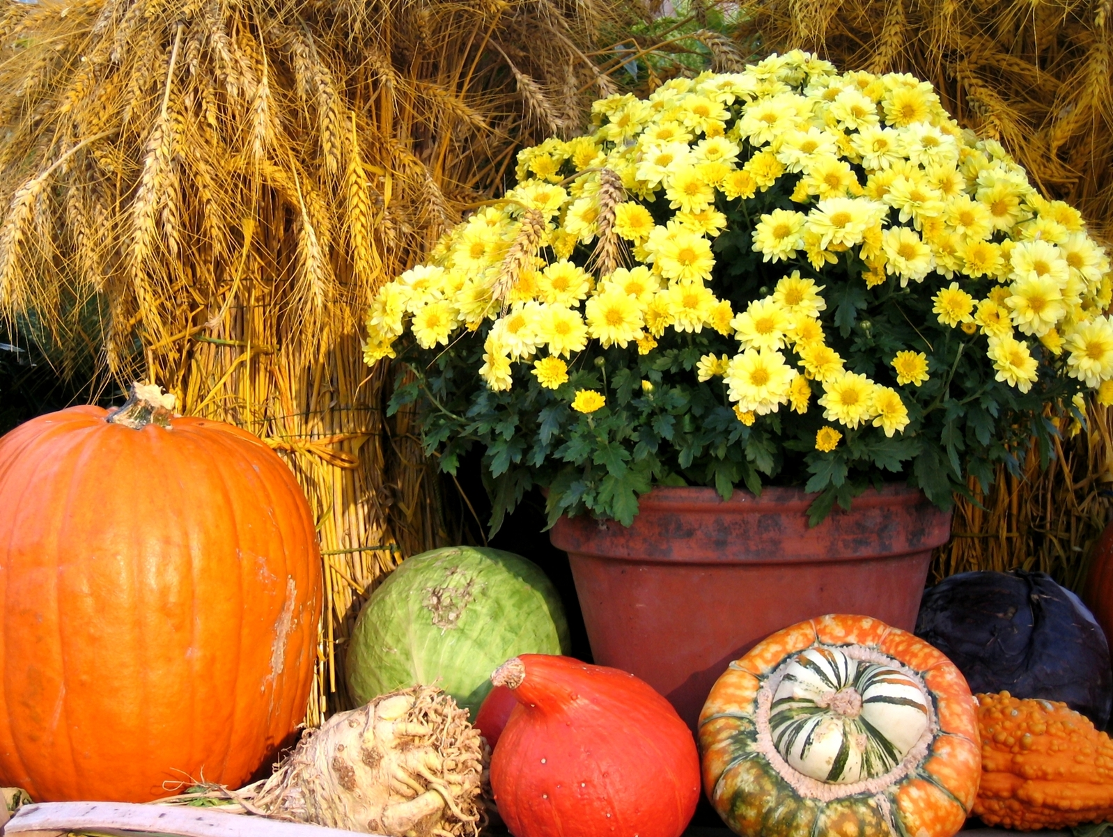 Gorgeous autumn tablescapes for all occasions