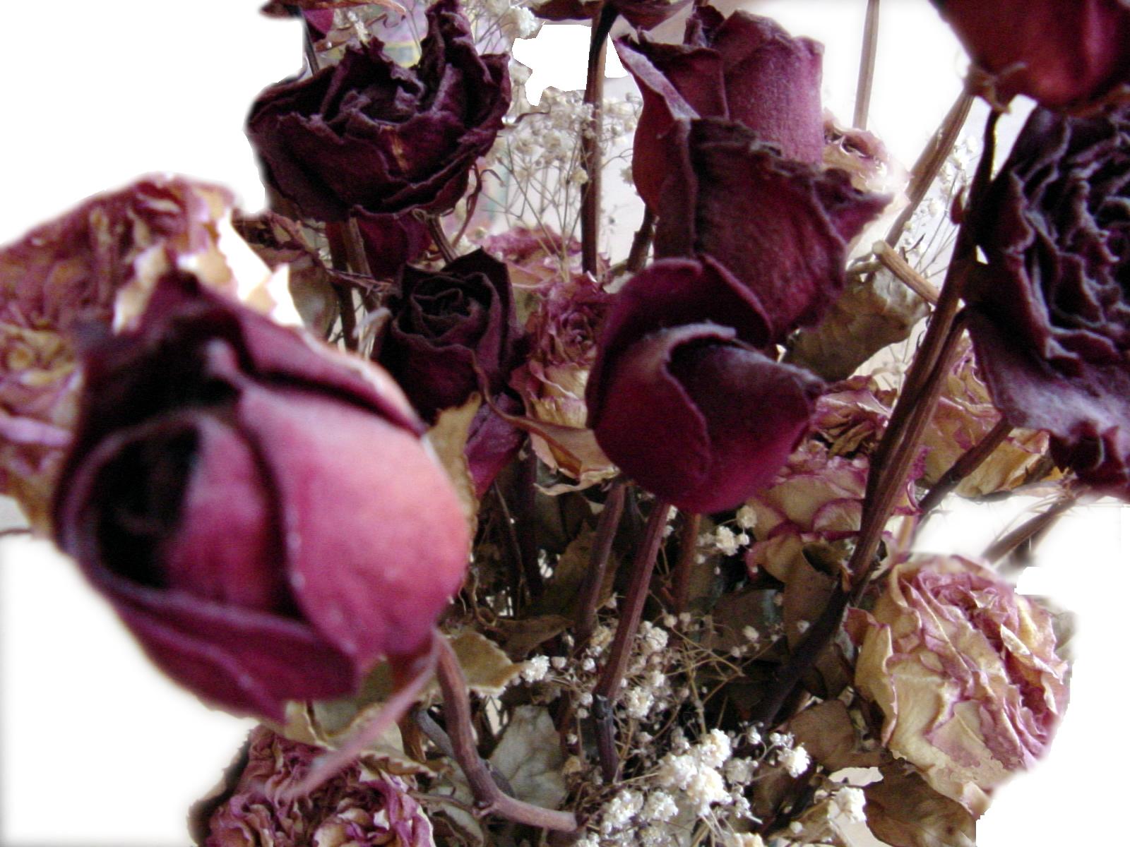 The best flowers for dried flower arrangements