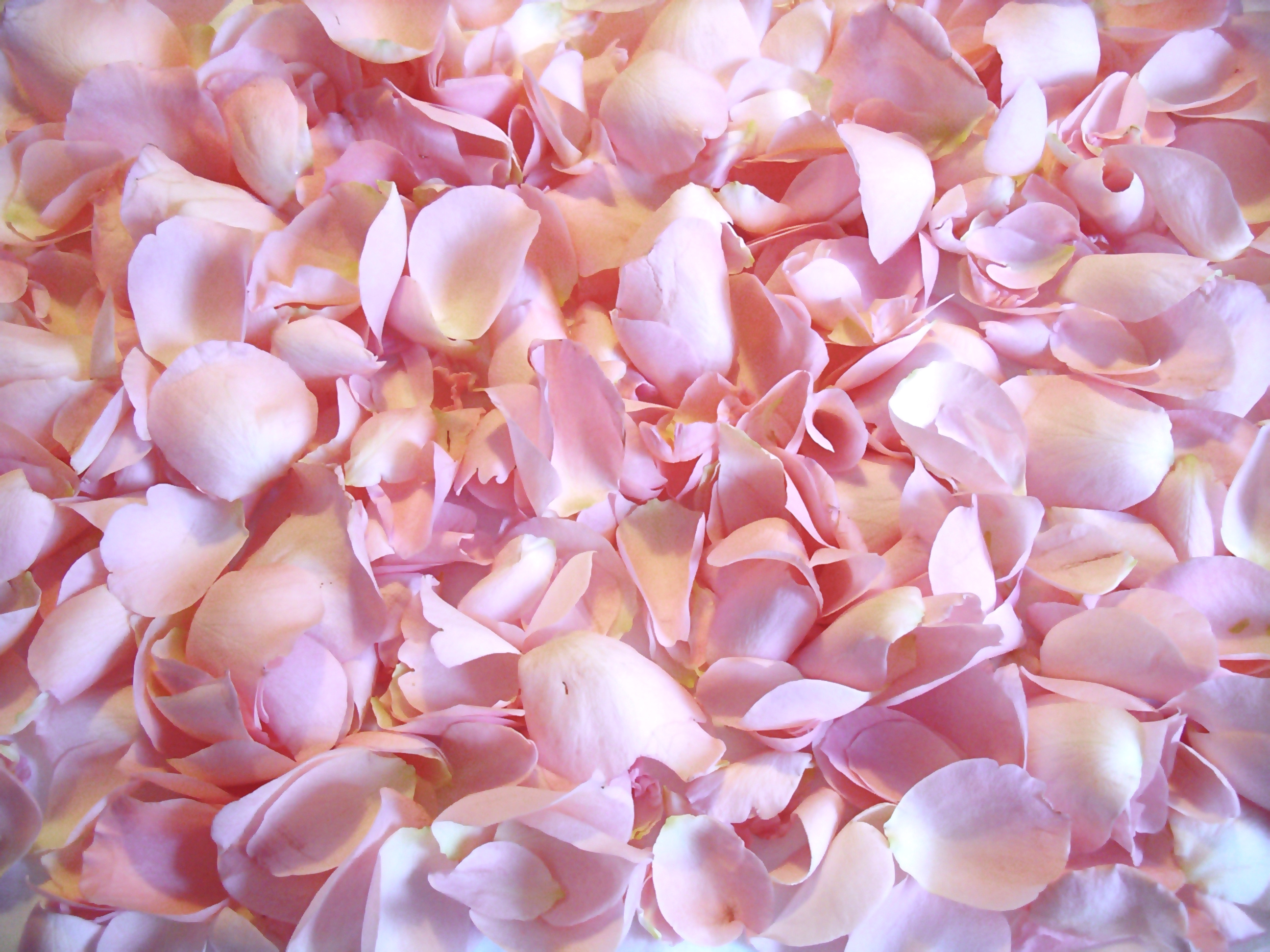 How to make your own flower confetti