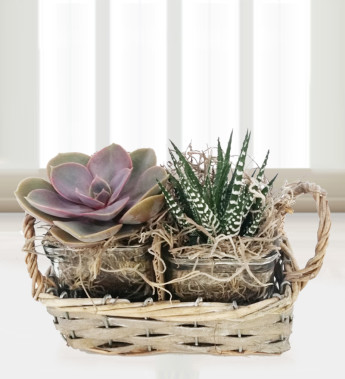 Why cacti make an excellent gift