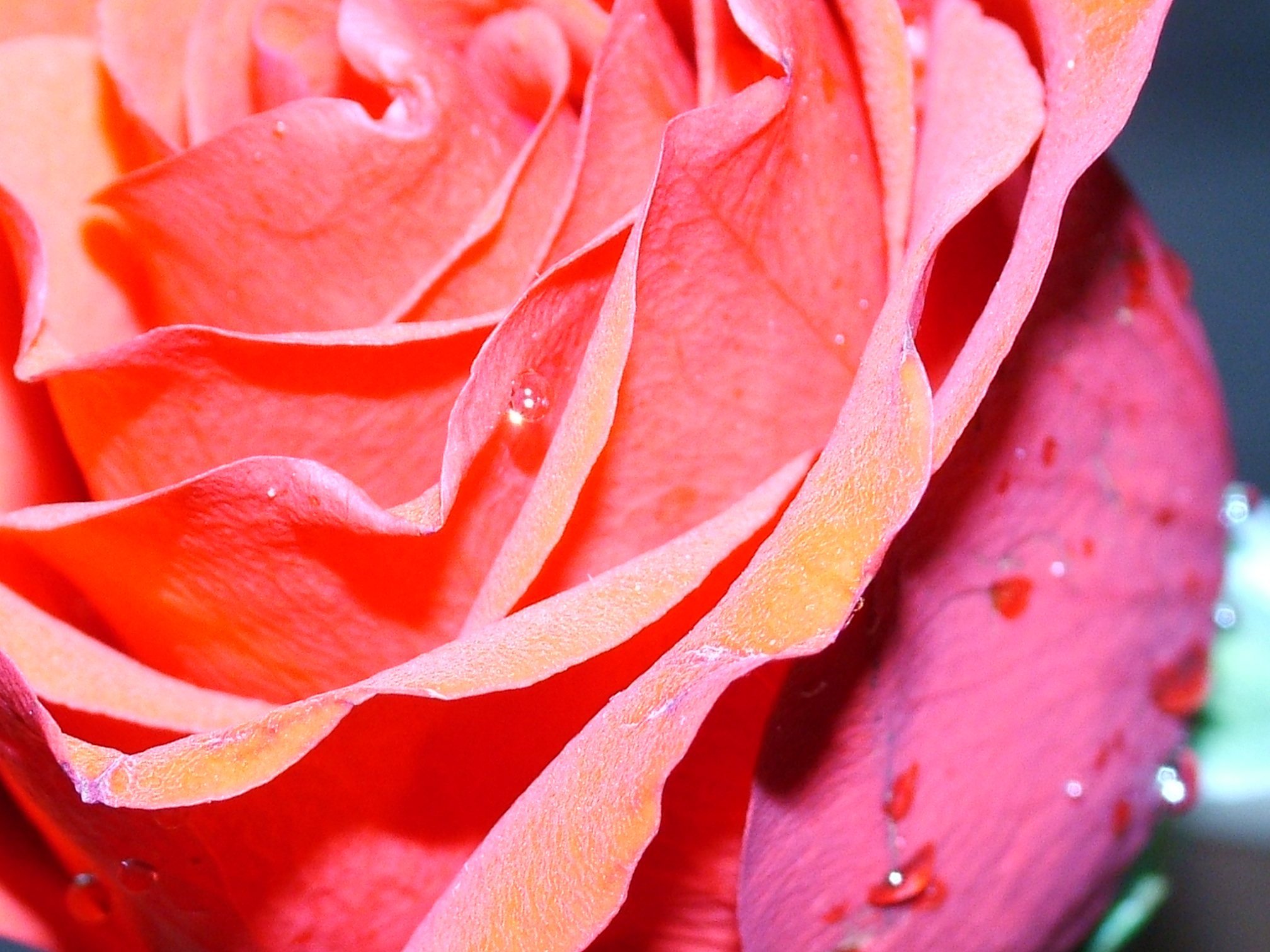 How to make a crepe paper rose bouquet