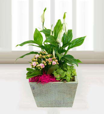 Use plants to improve the air in your home