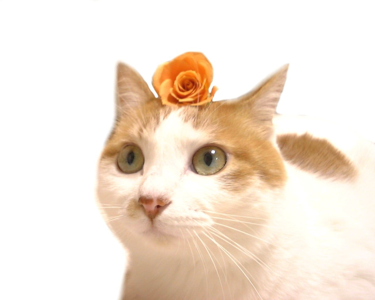 Send flowers that are safe for pets
