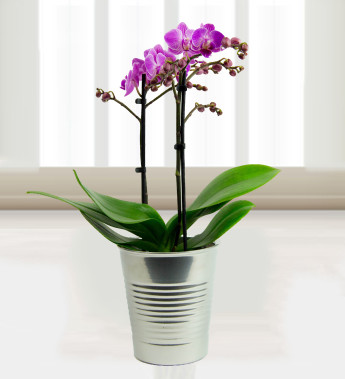 How to care for your potted orchids