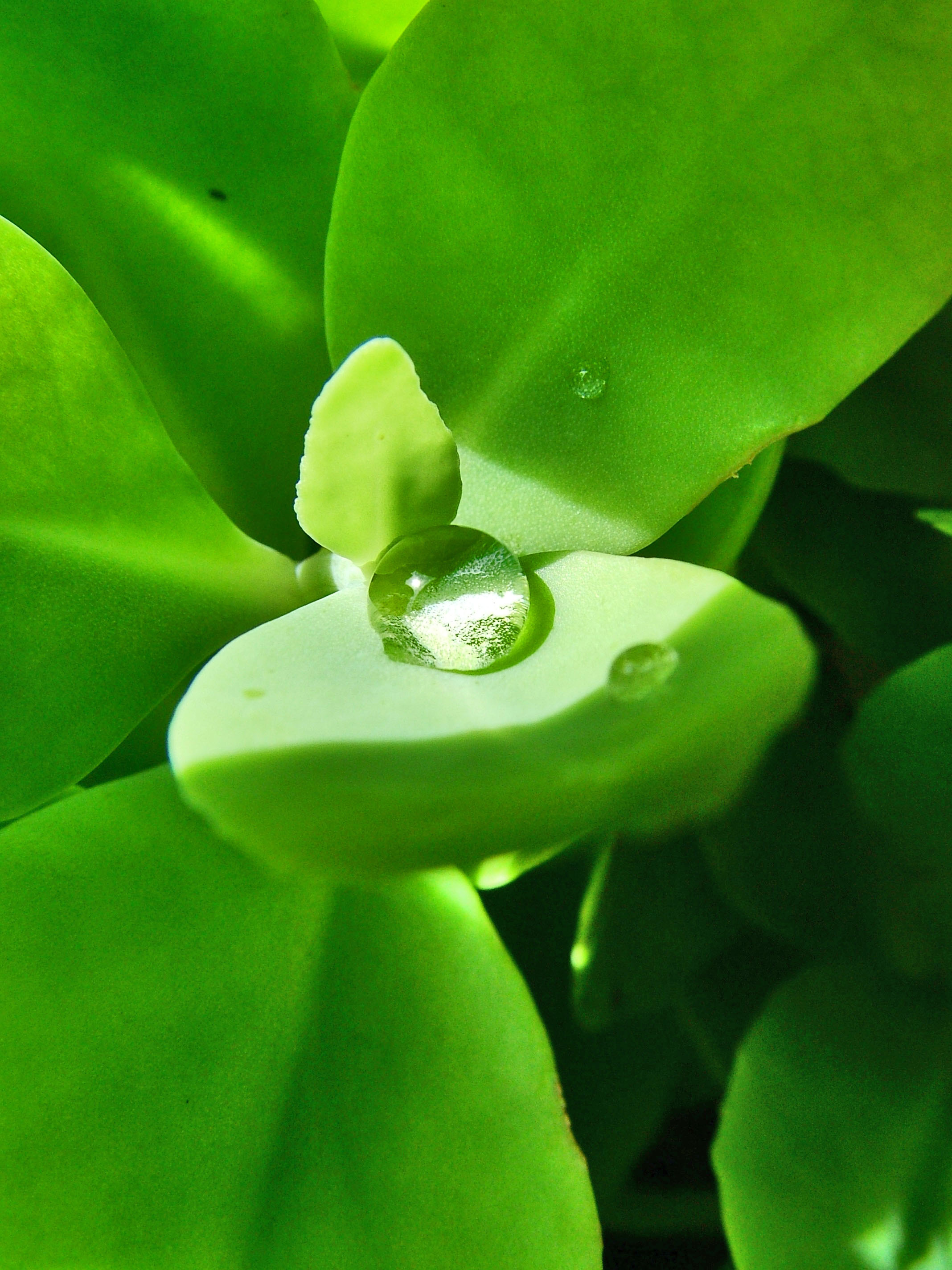 How much water do your potted plants need?