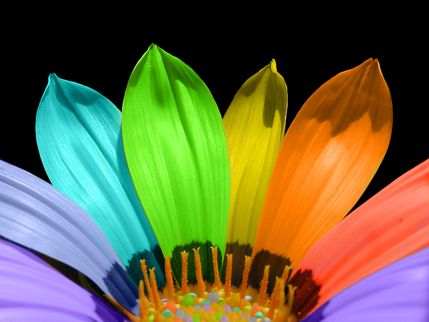 How the colours of flowers affect us