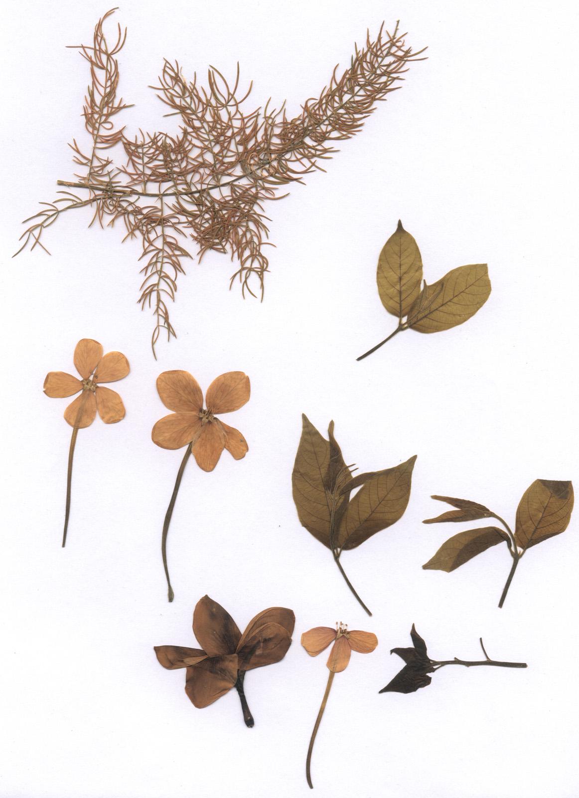 Flower preservation techniques
