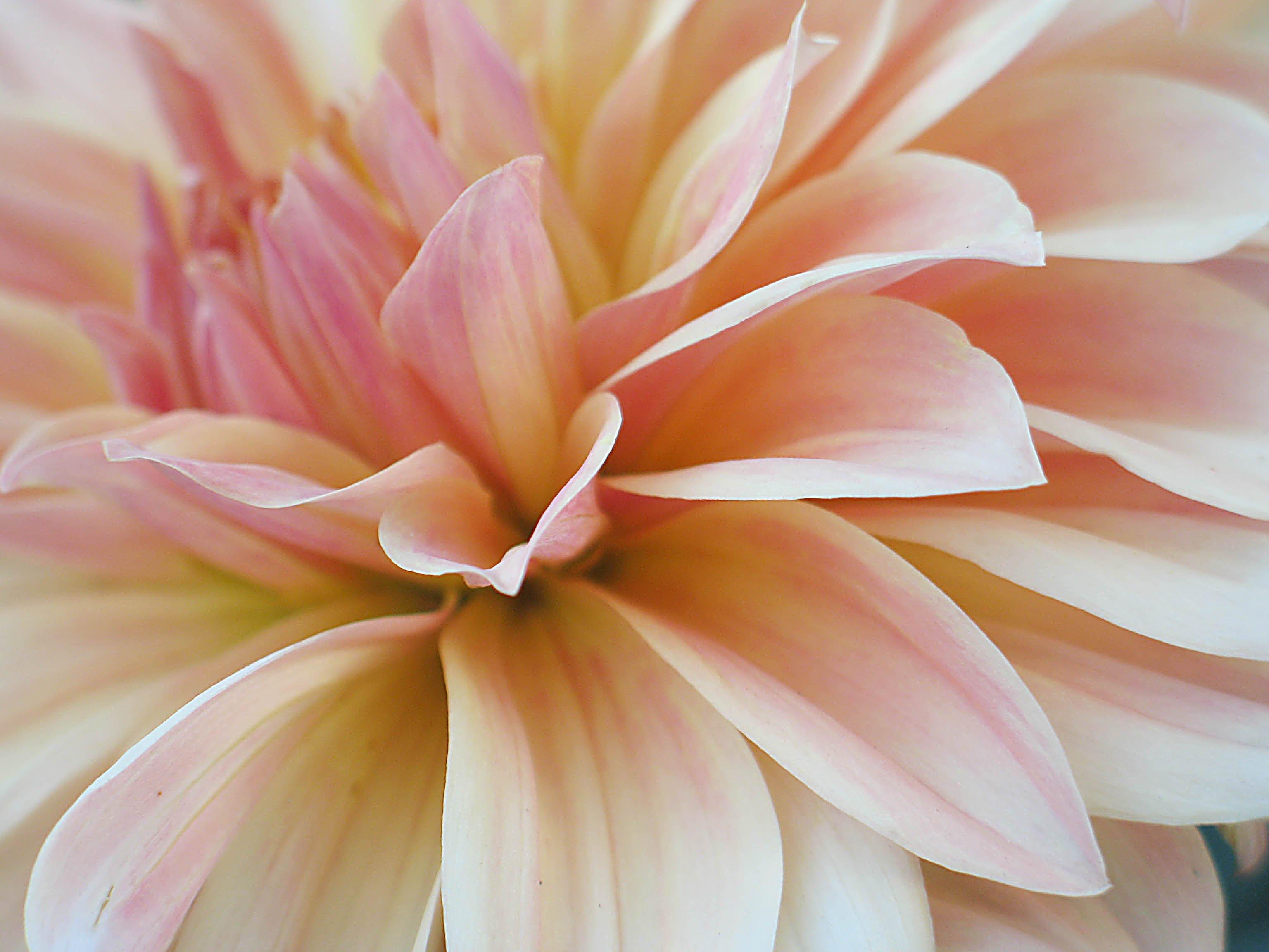 Flowers for the summer season
