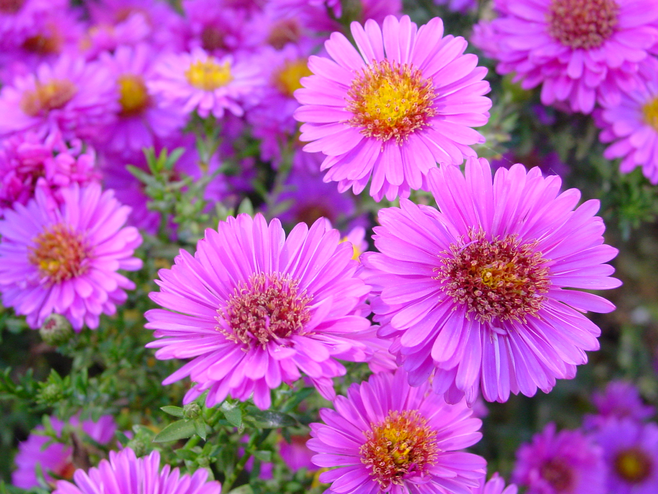 Fresh flowers for summer