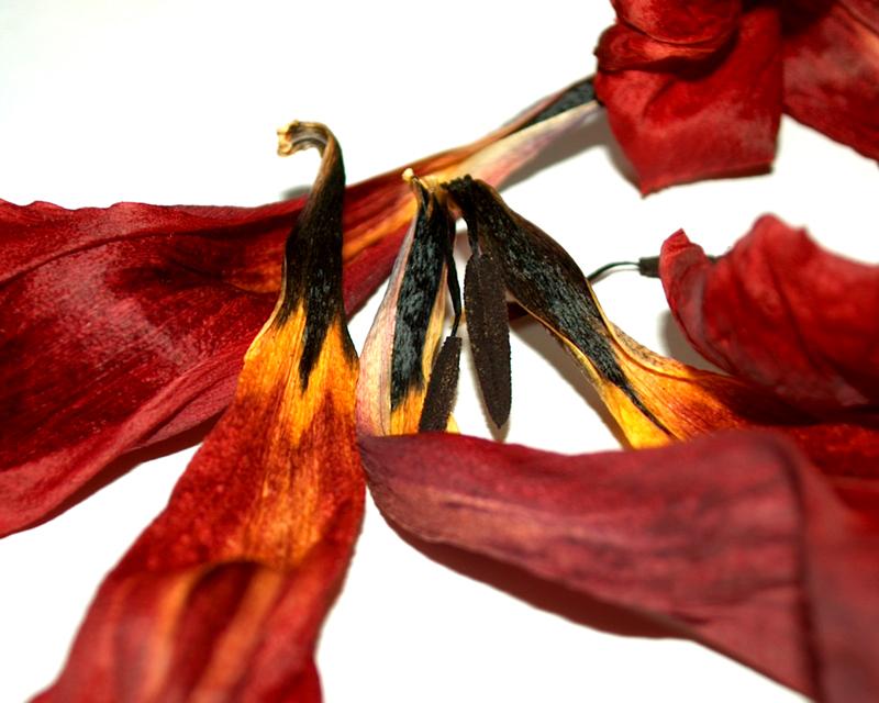 Pressed flower bouquet tips