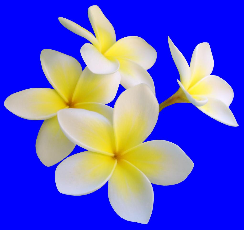 How to make a Hawaiian flower arrangement
