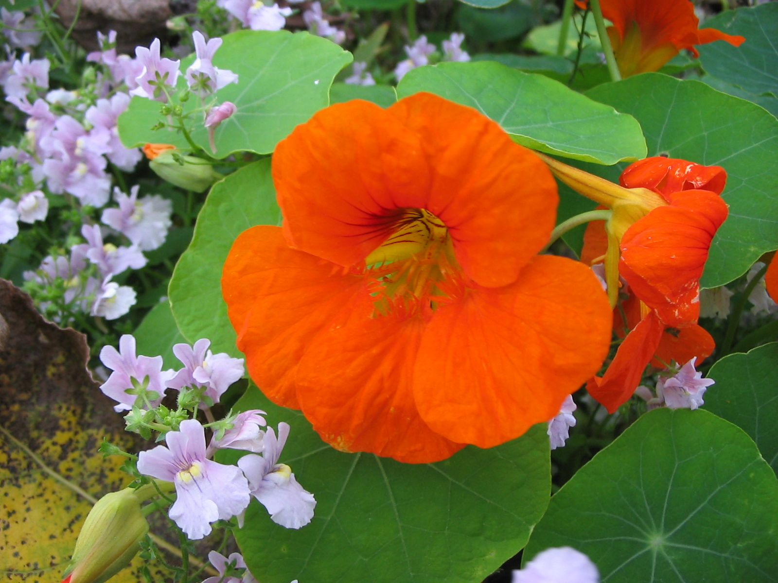 What you need to know about companion planting