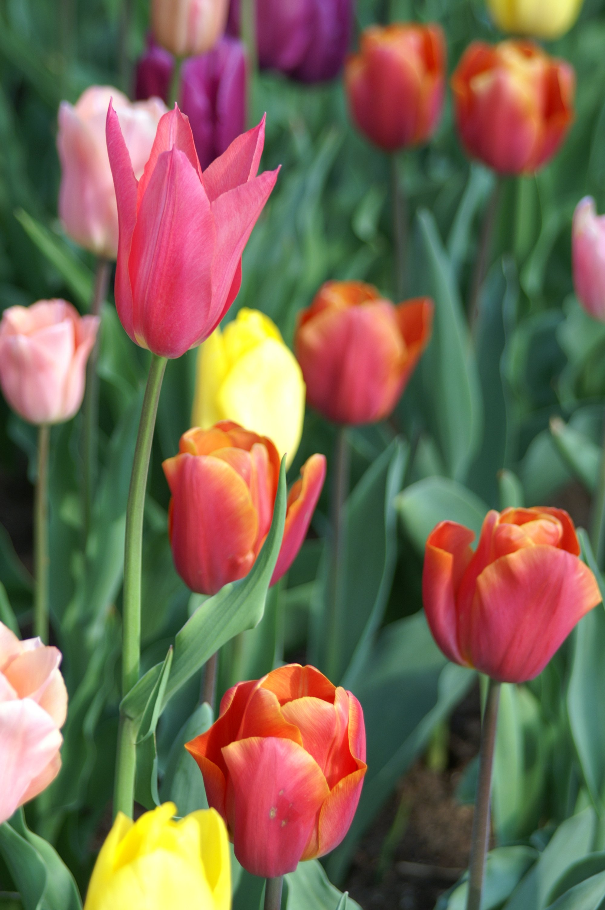 Why different flowers have different colours