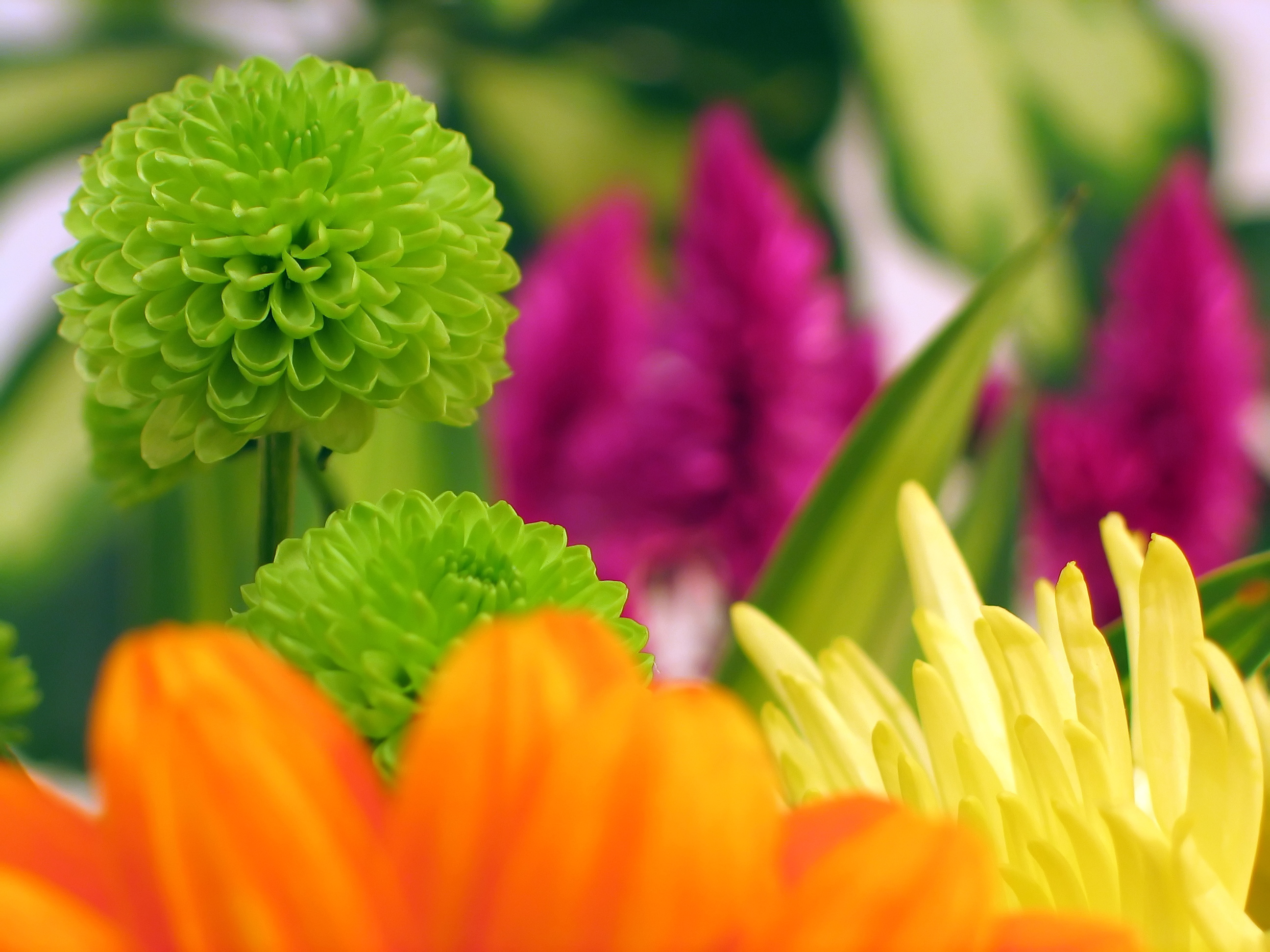 Cheer somebody up with fresh flowers