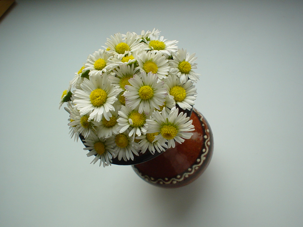 What's not to love about daisies?