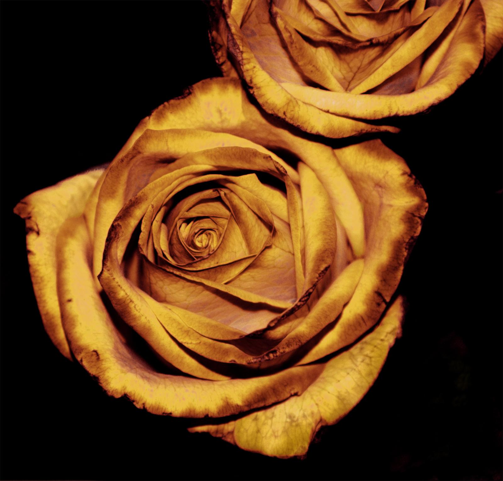 Gold sympathy flowers