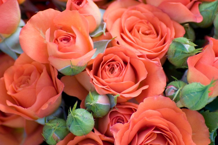 Planning flowers for any event