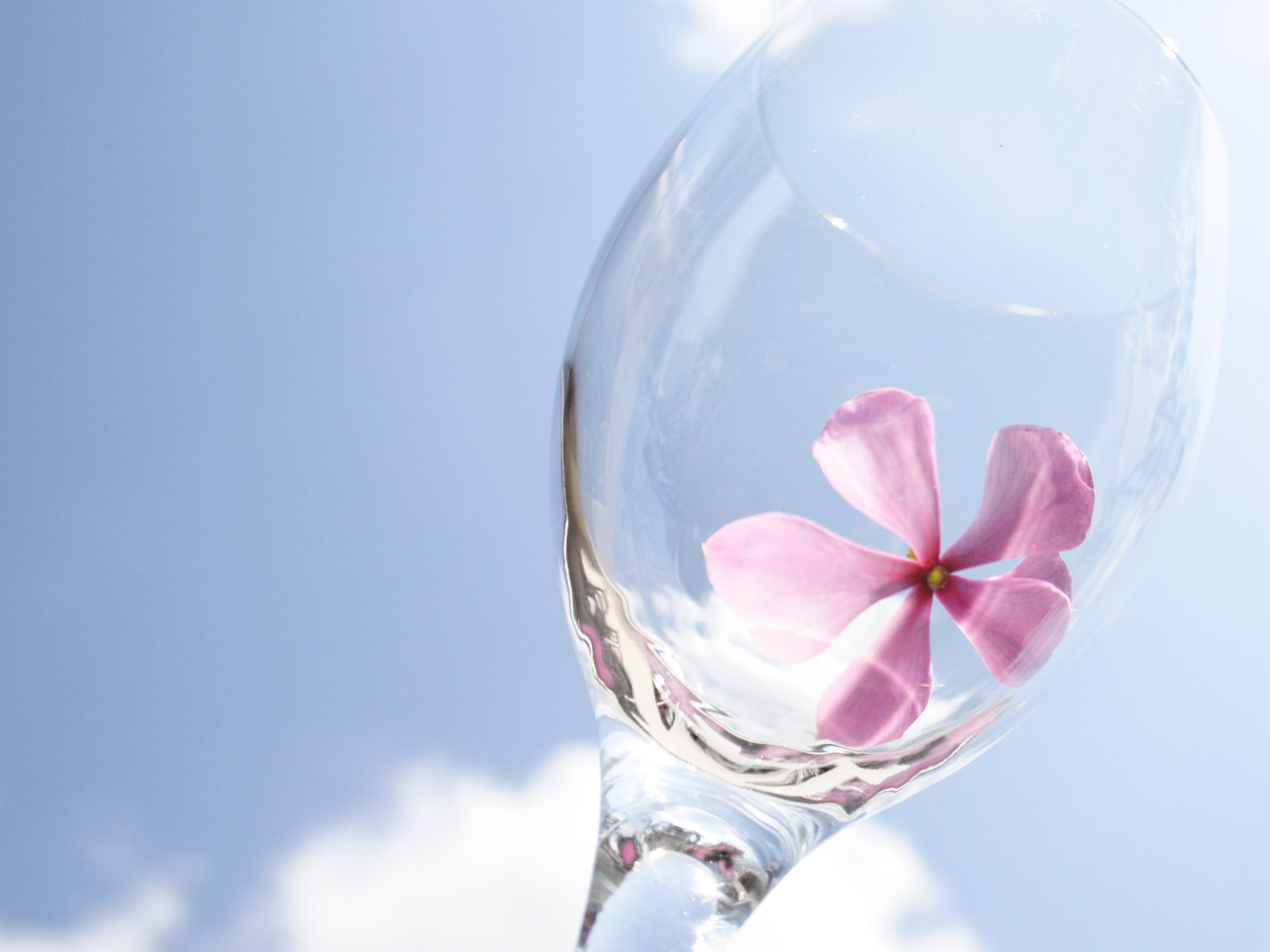 Give your wine glasses a floral theme