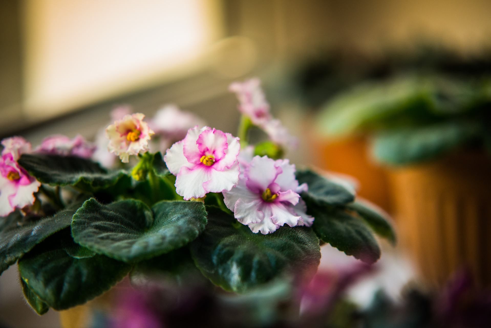 Plants to improve your apartment